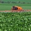 Impactos socio ambientales de la soja en Paraguay