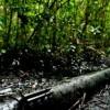 Perú: 60 derrames en 15 años