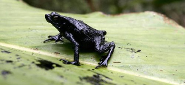 Petróleo en los bosques: el caso de Ecuador